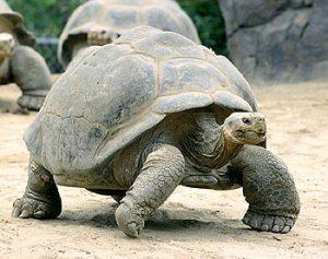 tortoise_photo